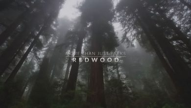 Photo of Gorgeous Short Film 'Among the Redwoods' (Video)
