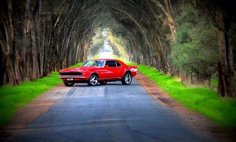 Photo of Afternoon Drive (30 Photos)