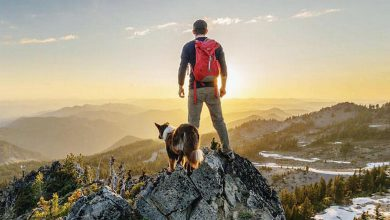 Photo of #CampingWithDogs is What Instagram Was Made For (39 Photos)
