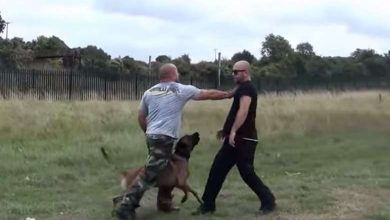 Photo of Impressive Training Video of a Military Police K9 Unit in Action (Video)