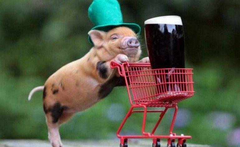 Photo of Happy St. Patrick's Day from Suburban Men! (46 Photos)