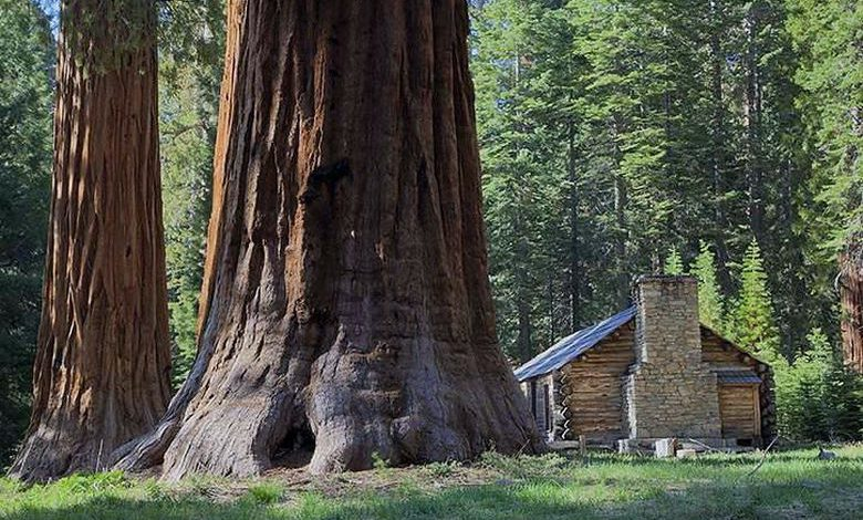 Photo of All I Need is a Little Cabin in the Woods (27 Photos)