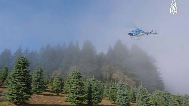 Harvesting a Million Christmas Trees With a Helicopter (1)